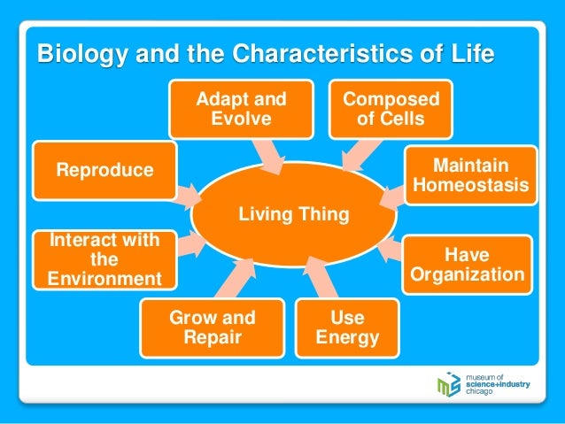 characteristics of life rh slideshare net 8 characteristics of life biology diagram five characteristics of life in biology
