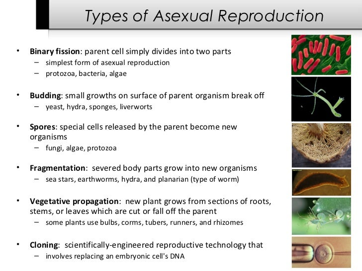 Different types of asexual spores
