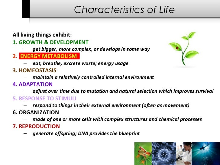 7 characteristics of life A brief introduction to the characteristics that all living things share you will find everything from 5 to 20 criteria if you search various sites 7 is a.