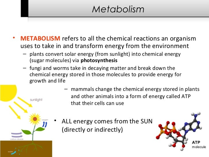 of the organism increases also 8
