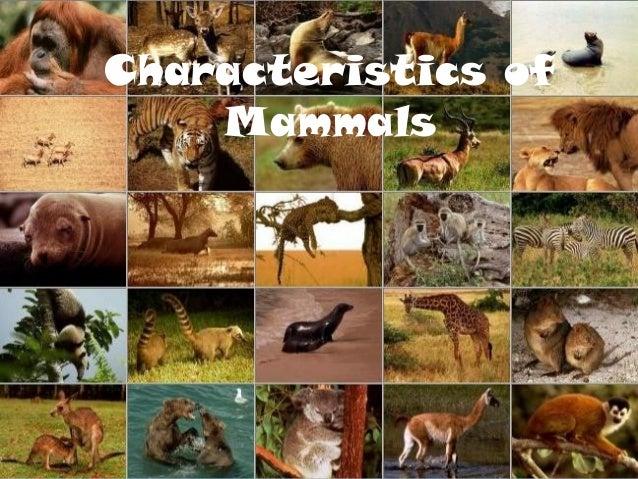 Characteristics of Mam...