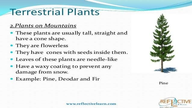 what are terrestrial plants give two examples