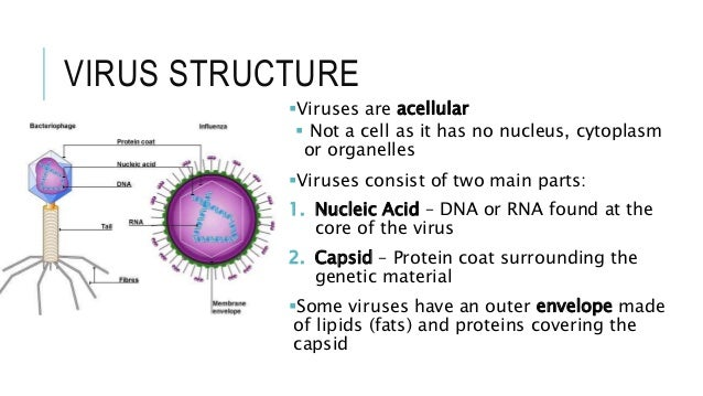 No Cell Diagram Of Viruses Circuit Connection Diagram
