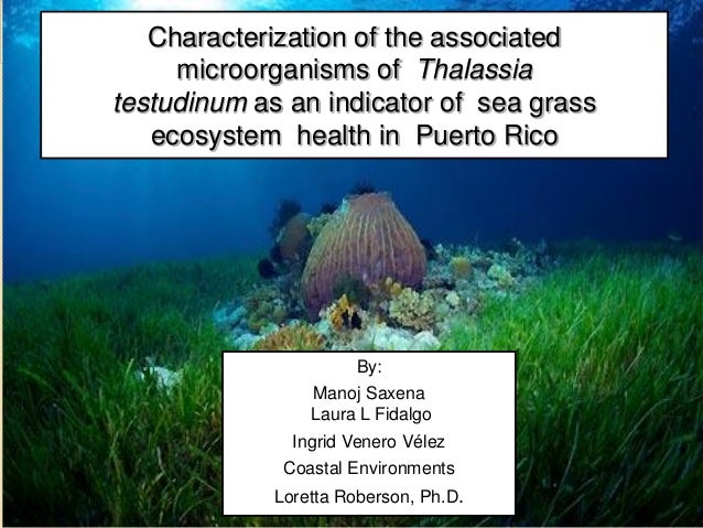 Characterization of the associated     microorganisms of Thalassiatestudinum as an indicator of sea grass   ecosystem heal...