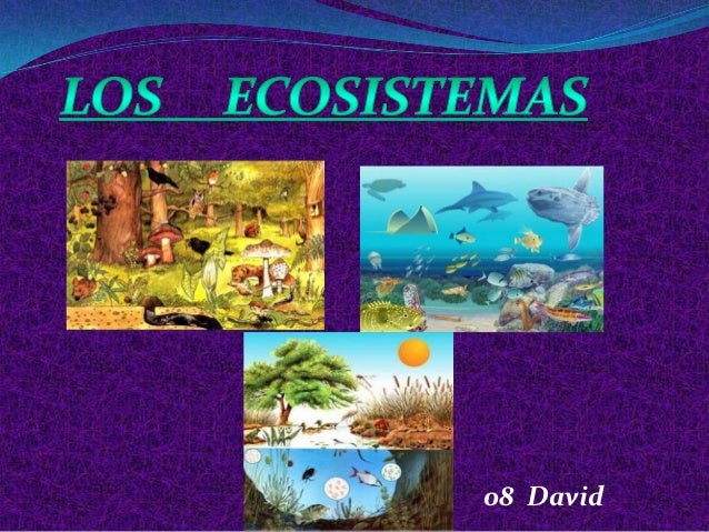 08 David