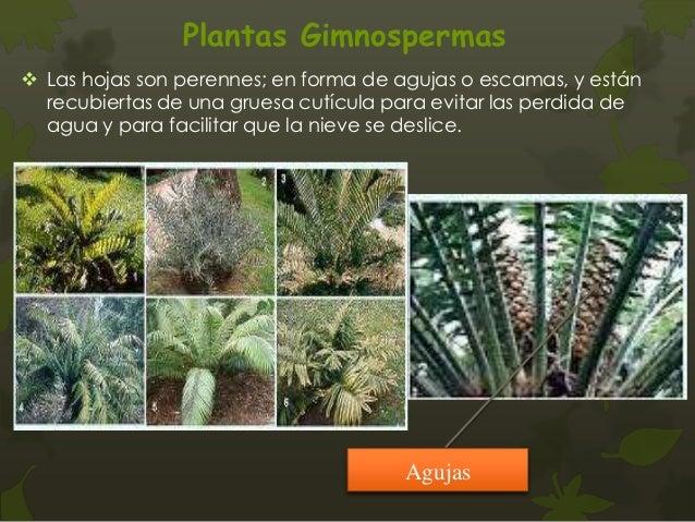 Plantas vasculares con semilla for Plantas sin semillas