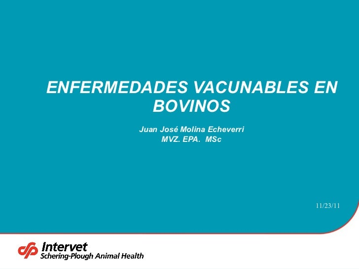 ENFERMEDADES VACUNABLES EN BOVINOS Juan José Molina Echeverri MVZ. EPA.  MSc