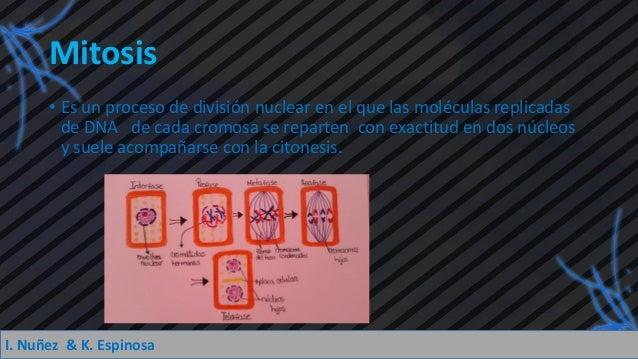Mitosis y Meiosis.pdf Slide 3