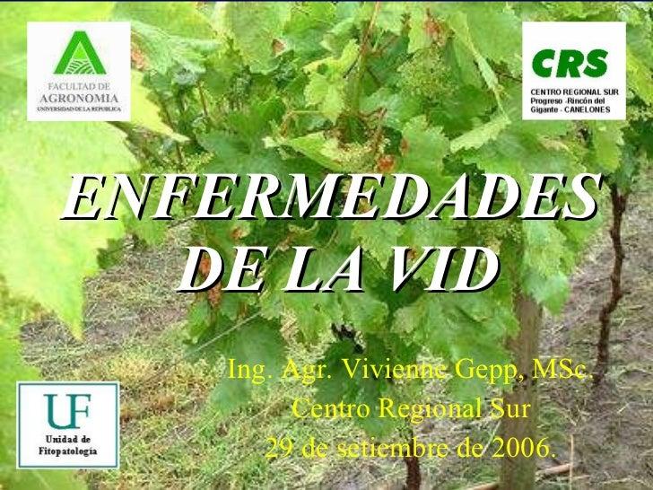 ENFERMEDADES  DE LA VID Ing. Agr. Vivienne Gepp, MSc. Centro Regional Sur 29 de setiembre de 2006.