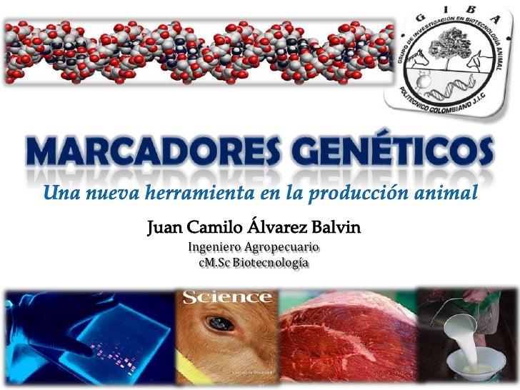 MARCADORES GENÉTICOS<br />Una nueva herramienta en la producción animal<br />Juan Camilo Álvarez Balvin<br />Ingeniero Agr...