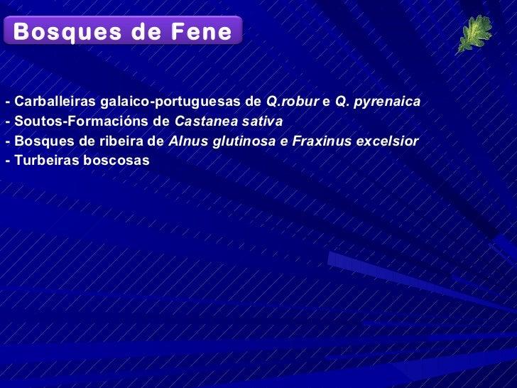 <ul><li>- Carballeiras galaico-portuguesas de  Q.robur  e  Q. pyrenaica </li></ul><ul><li>- Soutos-Formacións de  Castanea...