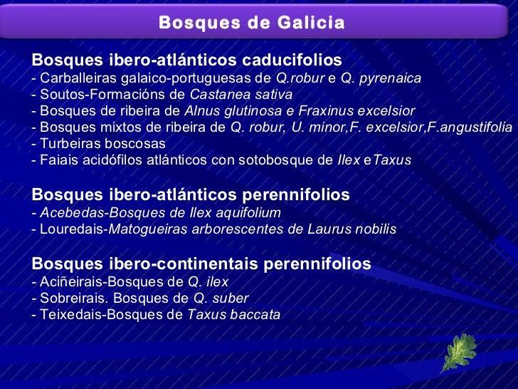 <ul><li>Bosques ibero-atlánticos caducifolios </li></ul><ul><li>- Carballeiras galaico-portuguesas de  Q.robur  e  Q. pyre...