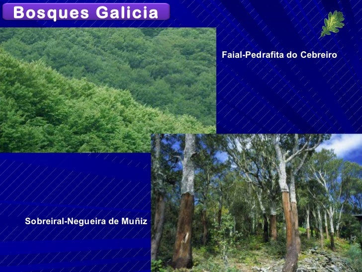 Sobreiral-Negueira de Muñiz Faial-Pedrafita do Cebreiro Bosques Galicia