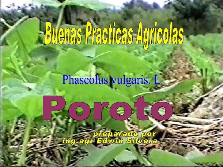 Buenas Practicas Agricolas Poroto Phaseolus vulgaris. L preparado por : ing.agr Edwin Silvera