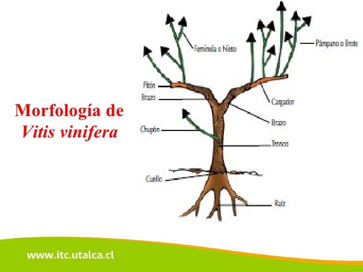 Respiracion y fotosintesis de la planta 57