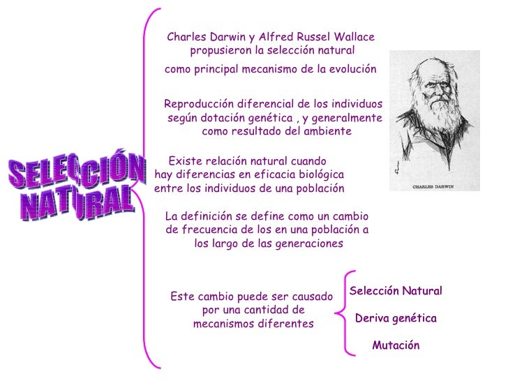 wallace and darwin steroids
