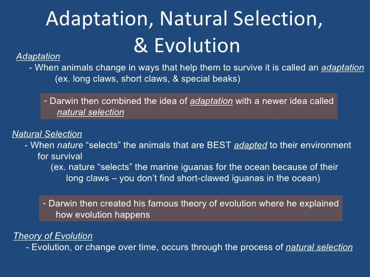 Natural Selection Evolution Relationship