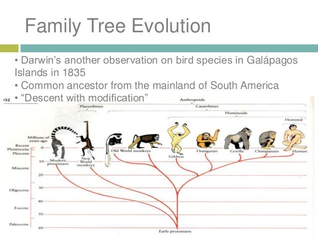 What Does Evolution By Natural Selection Mean
