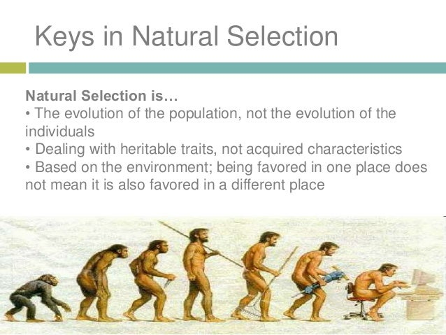 Natural Selection Evolutionary Process