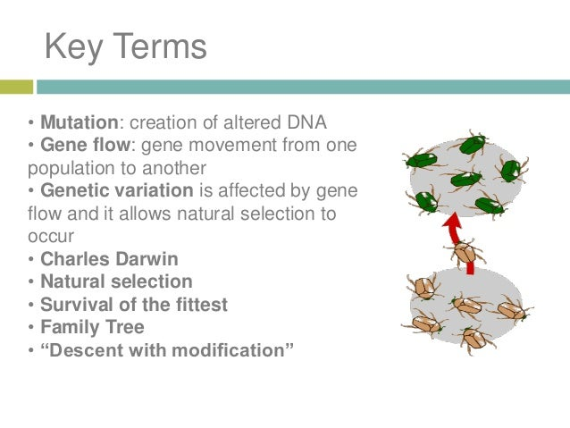 plato to darwin to dna Plato to darwin to dna: a brief history by muehlbauer esther plato to darwin to dna: a brief history by muehlbauer esther pdf, epub ebook d0wnl0ad.