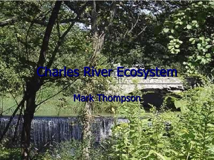 Charles River Ecosystem Mark Thompson