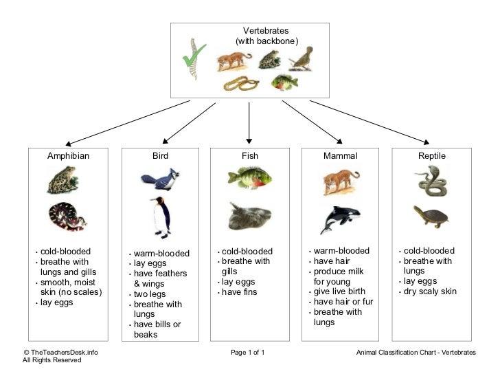 Reptile Classification Diagram Block And Schematic Diagrams