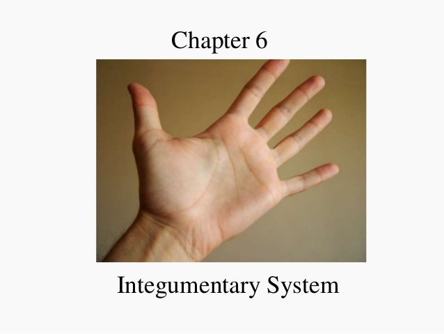 Chapter 6  Integumentary System