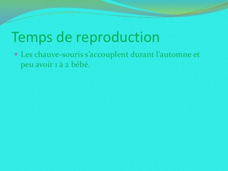 Temps de reproduction<br />Les chauve-souris s'accouplent durant l'automne et peu avoir 1 à 2 bébé.<br />