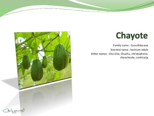 Family name : CucurbitaceaeScientist name : Sechium eduleOther names : Cho-Cho, Chuchu, christophene,chouchoute, centinarja