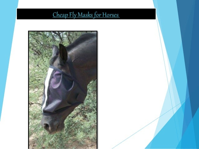 Cheap Fly Masks for Horses