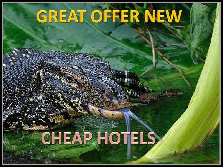 GREAT OFFER NEW<br />CHEAP HOTELS<br />
