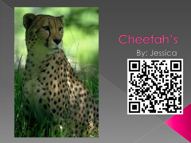 That's what I learned about cheetahs, and I hope that you learnedsomething too. The End