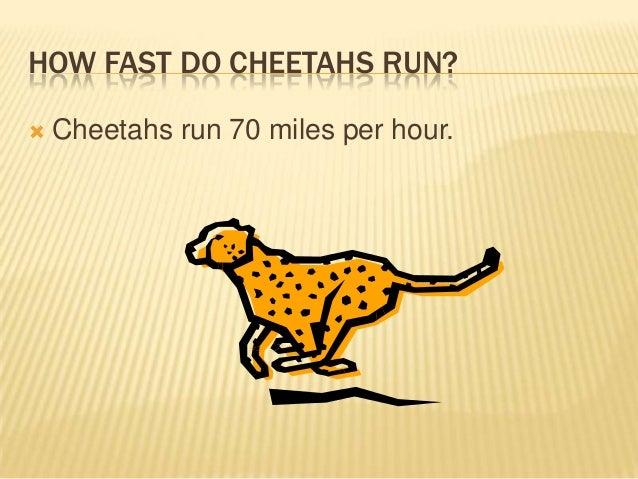 How Fast Do Cheetahs Run Cheetahs by aid...