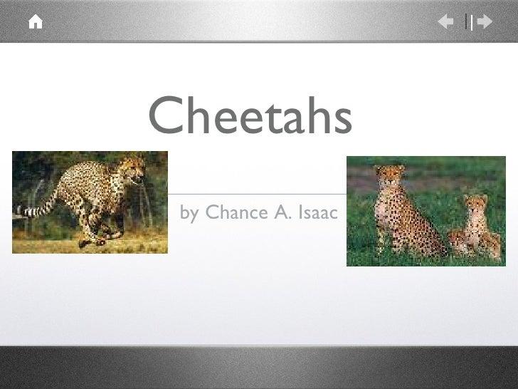 Cheetahs  <ul><li>by Chance A. Isaac </li></ul>