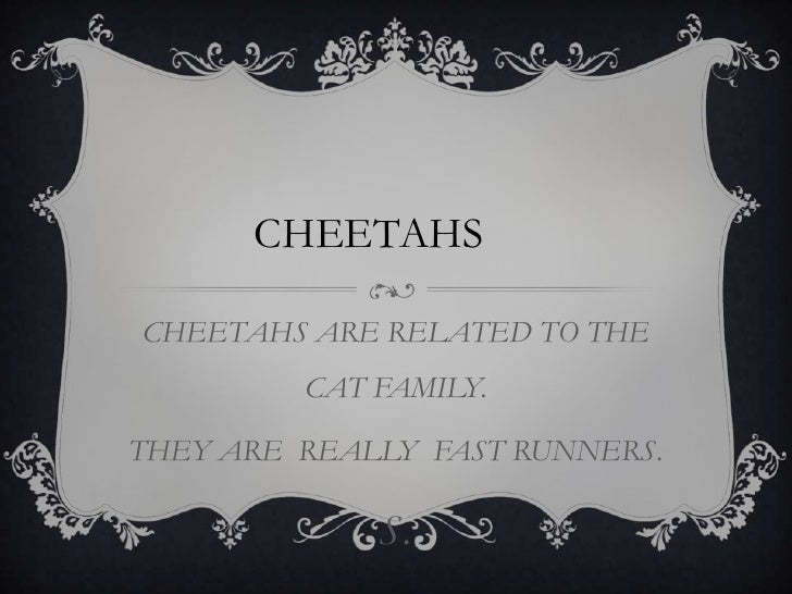 CHEETAHS ARE RELATED TO THE CAT FAMILY.<br />THEY ARE  REALLY  FAST RUNNERS.<br />S.<br />CHEETAHS<br />