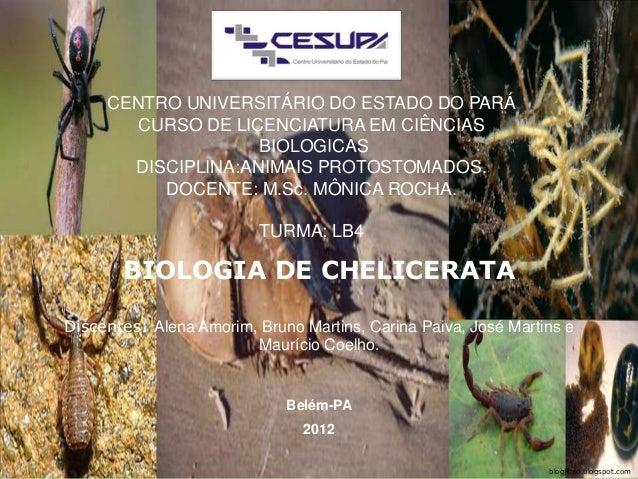 CENTRO UNIVERSITÁRIO DO ESTADO DO PARÁ CURSO DE LICENCIATURA EM CIÊNCIAS BIOLOGICAS DISCIPLINA:ANIMAIS PROTOSTOMADOS. DOCE...