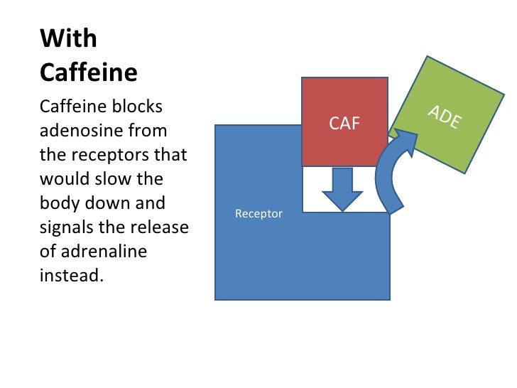 Chemical Action Of Caffeine