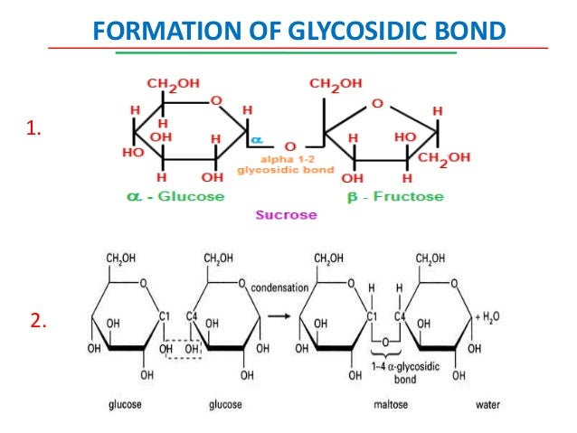 importance of chemical bonding During reactions that make up a living being's metabolism, existing chemical bonds can break, and new bonds can form this activity also releases energy that is important for the organism's survival.