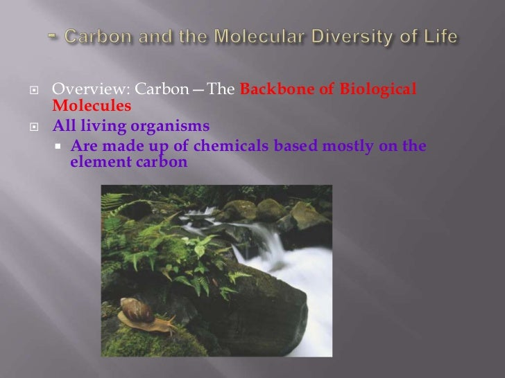 - Carbon and the Molecular Diversity of Life<br />Overview: Carbon—The Backbone of Biological Molecules<br />All living or...