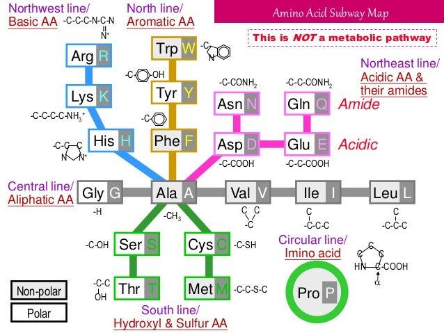 Map Amino Acids Chemistry of Amino Acids (Protein Chemistry   I) Map Amino Acids