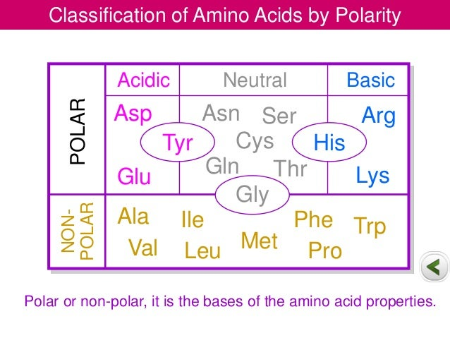 Chemistry of amino acids protein chemistry i 15 thecheapjerseys Gallery