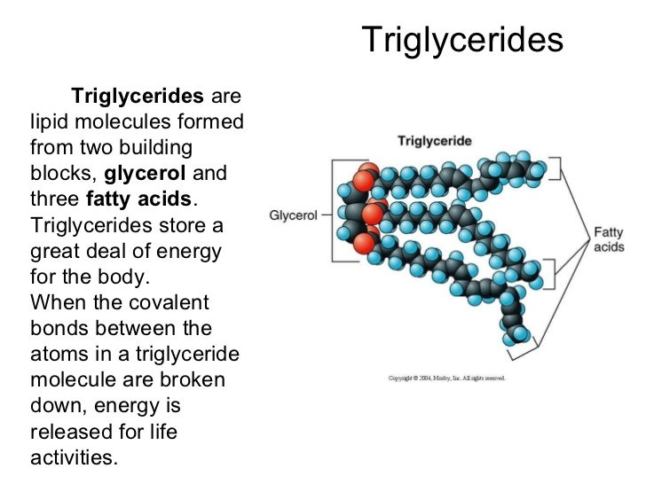 The Building Blocks Of Triglycerides Are