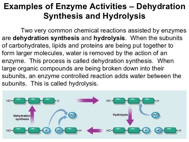 Dehydration Synthesis Example Chemistry of Life