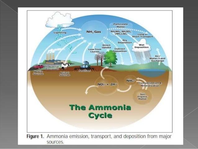 ammonia and polymerasation