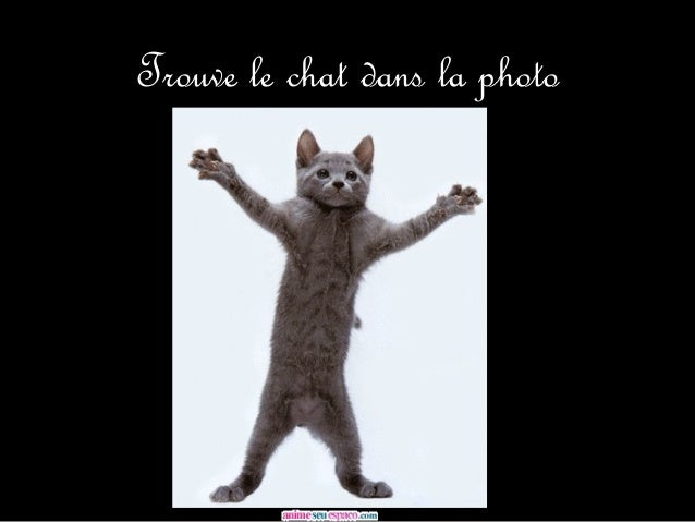 Trouve le chat dans la photo