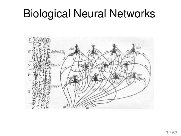Biological Neural Networks 3 / 62