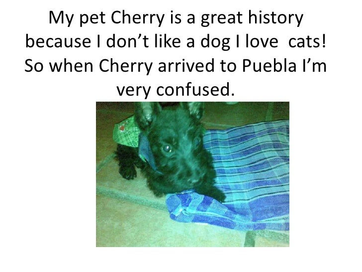 My pet Cherry is a great history because I don't like a dog I love  cats! So when Cherry arrived to Puebla I'm very confus...