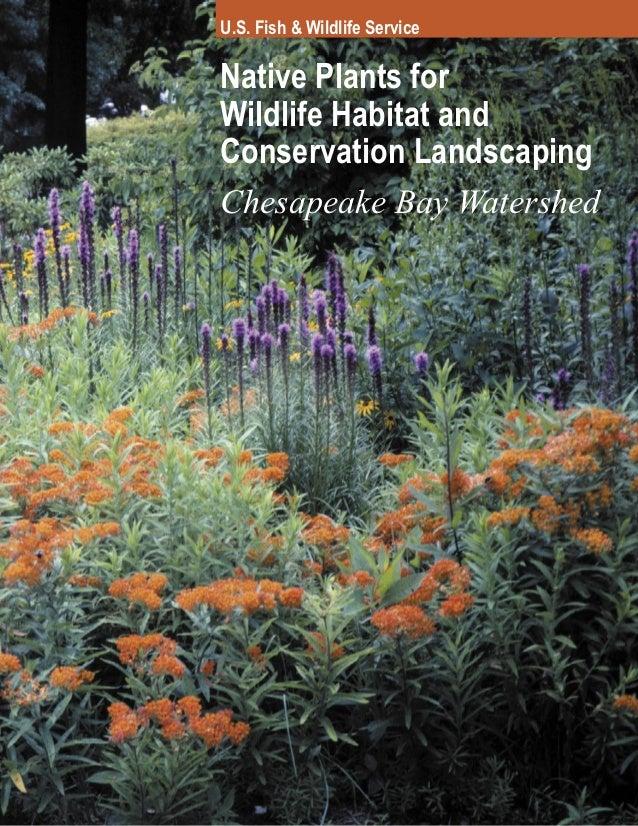 U.S. Fish & Wildlife ServiceNative Plants forWildlife Habitat andConservation LandscapingChesapeake Bay Watershed