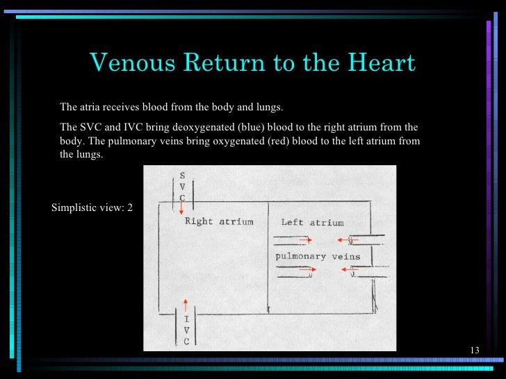 Venous Return to the Heart The atria receives blood from the body and lungs. The SVC and IVC bring deoxygenated (blue) blo...