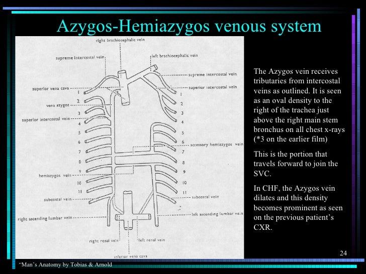Azygos-Hemiazygos venous system                                    The Azygos vein receives                               ...
